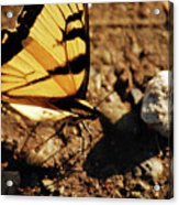 Butterfly On The Rocks Acrylic Print