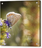 Butterfly On The Spot Acrylic Print