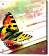 Butterfly On The Window Frame Watercolor Acrylic Print