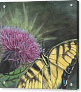 Butterfly On Thistle 2010 Acrylic Print