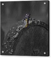 Butterfly On Tombstone Acrylic Print