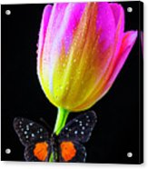 Butterfly On Yellow Pink Tulip Acrylic Print