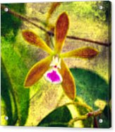Butterfly Orchid - Encyclia Tampensis Acrylic Print