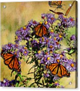 Butterfly Party Acrylic Print