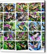 Butterfly Plethora I Acrylic Print