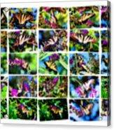 Butterfly Plethora II Acrylic Print