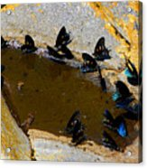 Butterfly Pool Acrylic Print