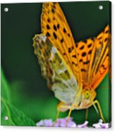 Butterfly Pose Acrylic Print