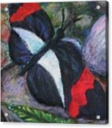 Butterfly Resting Acrylic Print