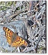 Butterfly Rock Acrylic Print