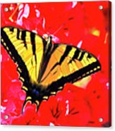 Butterfly Series #11 Acrylic Print