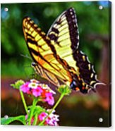Butterfly Series #8 Acrylic Print