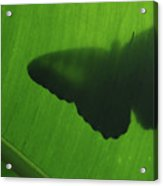 Butterfly Silhouette On Leaf Acrylic Print