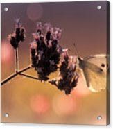 Butterfly Spirit #03 Acrylic Print by Loriental Photography