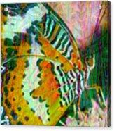 Butterfly Spirit Acrylic Print