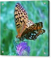 Butterfly Stare Acrylic Print