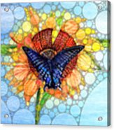 Butterfly Sunday After The Rain Acrylic Print