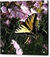 Butterfly Surprise Watercolor Acrylic Print