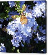 Butterfly Viii Acrylic Print