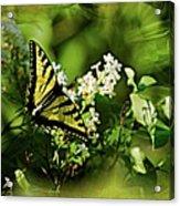 Butterfly Wall Decor Acrylic Print