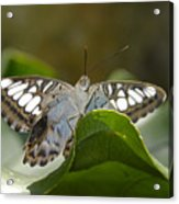 Butterfly Watching Acrylic Print