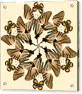Butterfly Wheel Dance Acrylic Print