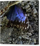 Butterfly Wings Acrylic Print