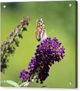 Butterfly With Flowers Acrylic Print