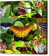 Butterfly Work 10 Acrylic Print
