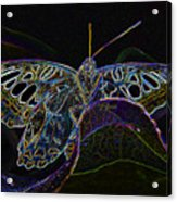 Butterfly Work Rws Number 6 Acrylic Print