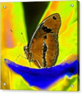 Butterfly Works Number 10 Acrylic Print