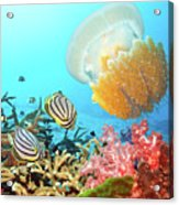 Butterflyfishes And Jellyfish Acrylic Print by MotHaiBaPhoto Prints