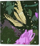 Butterfly's Delight Acrylic Print