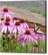 Butterfly's Lunch Acrylic Print