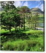 Buttermere Pines Acrylic Print