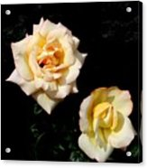 Buttermints Acrylic Print