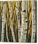 Buttery Birches Acrylic Print
