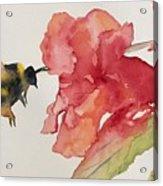 Buzz Bee Acrylic Print