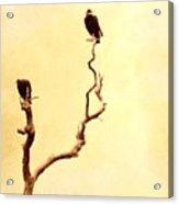 Buzzard Art Acrylic Print