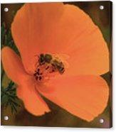 Buzzing Bee 1 Acrylic Print