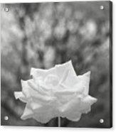 Bw 045 Acrylic Print
