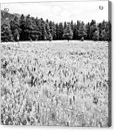 Bw Meadow Acrylic Print