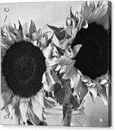 Bw Sunflowers #002 Acrylic Print