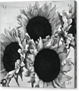 Bw Sunflowers #010 Acrylic Print