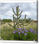 By The Cactus Acrylic Print