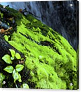 By The Waterfall Acrylic Print