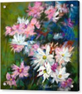 C And D  Cosmos And Daisy That Is Acrylic Print