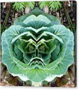 Cabbage Head Acrylic Print