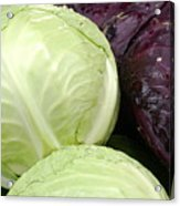 Cabbage Heads Acrylic Print