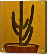 Cabo Cactus Acrylic Print